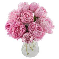 Pioenrozen-roze.jpg
