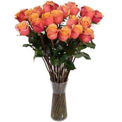 oranjerode-rozen.jpg