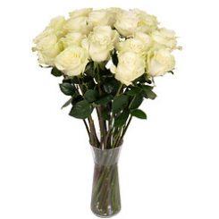 witte-rozen.jpg